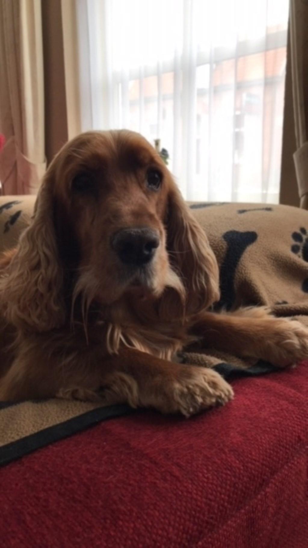 Dit is onze hond Harrie hij is voor ons de liefste en beste hond die we ooit gehad hebben ben nog steeds blij en gelukkig dat hij er nog is. (Kim van Ganzenwinkel)  © deMooiLaarbeekkrant