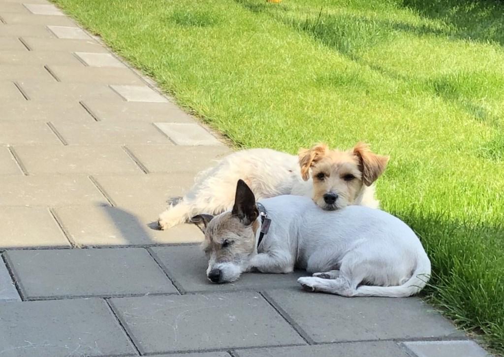 Jacky en Scooby (Kathy Mucha)  © deMooiLaarbeekkrant