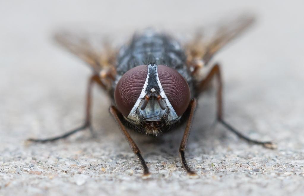 De close-up foto van deze vlieg kreeg de meeste stemmen van de lezer Foto: Jeroen Segers © deMooiLaarbeekkrant