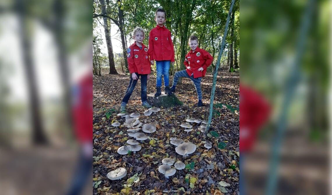 Drie stoere bevers in het bos bij de blokhut op zoek paddenstoelen