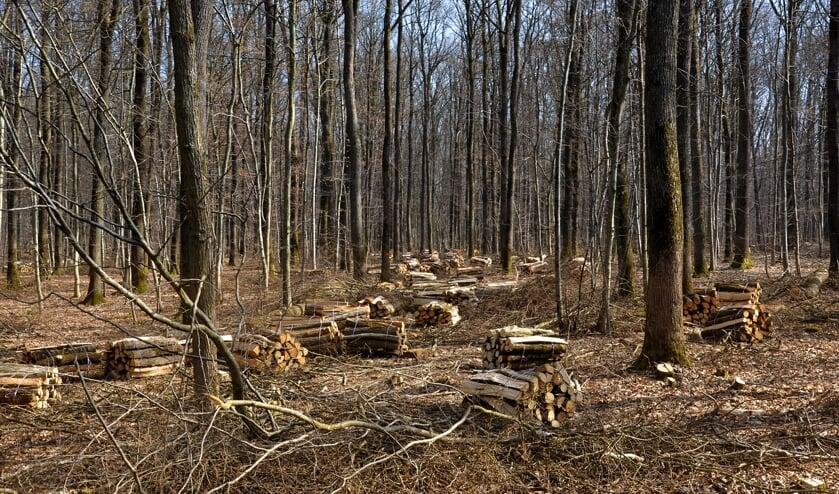 Het hout dat verbrand wordt, betreft snoei- en afvalhout. Maar is dat er voldoende in deze regio?