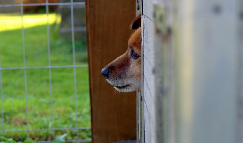 Vrijwilligerswerk biedt structuur en meer sociale contacten. Op heel veel gebieden zijn vrijwilligers nodig, bijvoorbeeld in een dierenasiel.