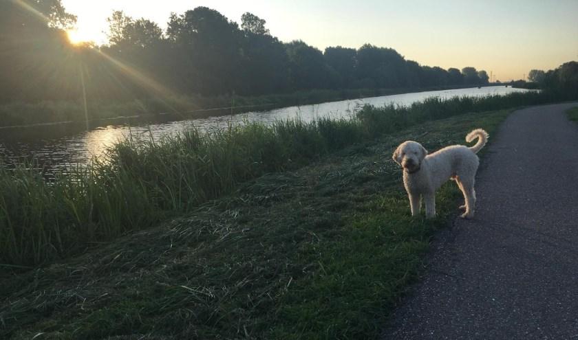 De hond uitlaten op een mooie zondagochtend, een vorm van Gratis Lekkerte.