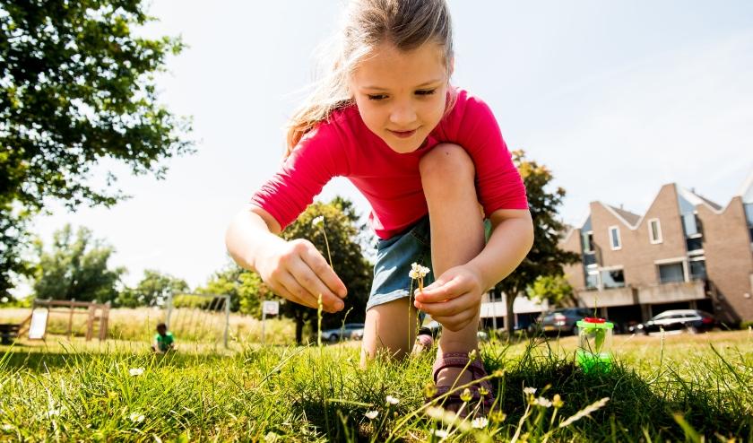 Ook dichtbij huis is volop natuur te vinden als je er oog voor hebt.