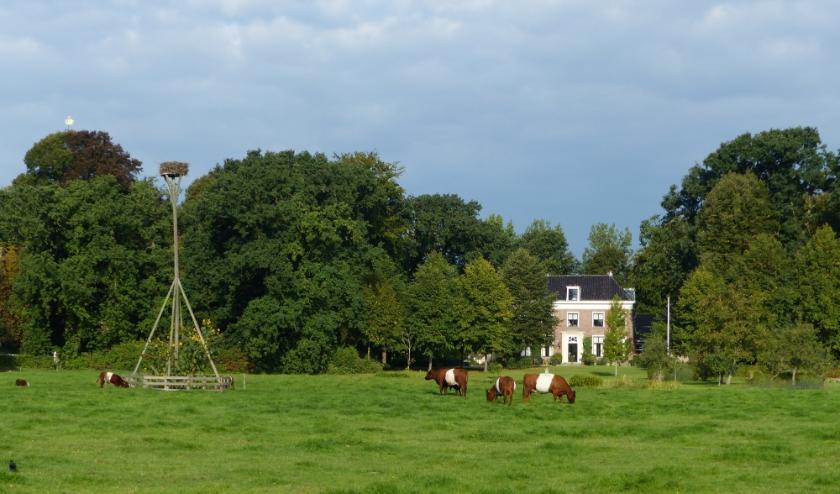 De Lakenvelders in het weiland op Landgoed Oostergeest.   Foto: pr.