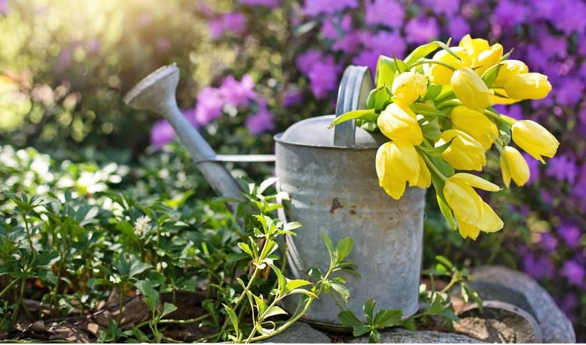 Wie weet maakt u een ander blij met de gieter waar u op uitgekeken bent. Kom gerust ruilen tijdens de plantenruilochtend in de heemtuin.