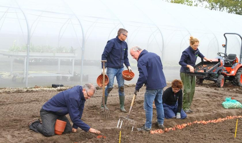 De aftrap van de Lenteflora: het in de grond zetten van de bollen die gebruikt worden voor de huisbroeiwedstrijden.