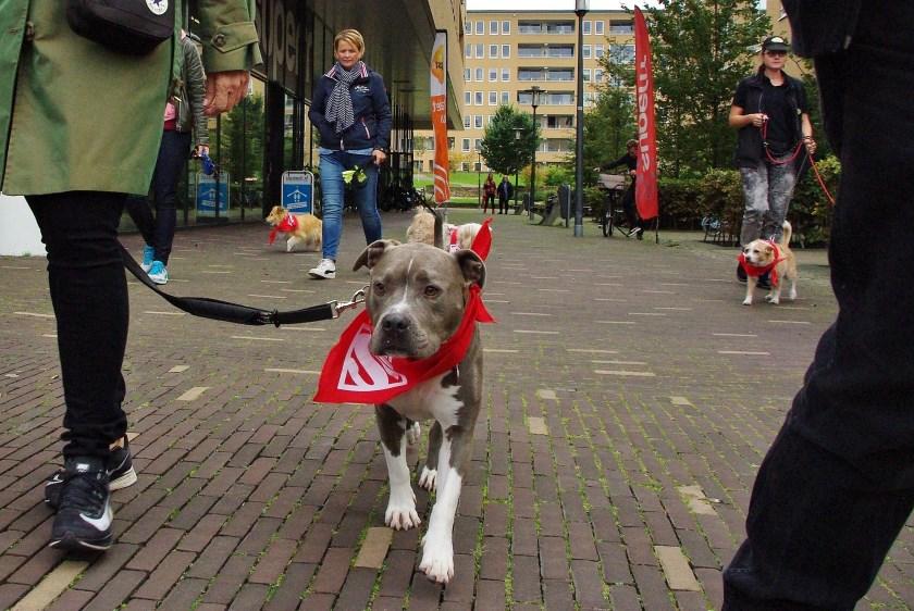 Op zaterdag 5 oktober vond vanuit Sportschool Jenergy de eerste Super Doggy Walk plaats.