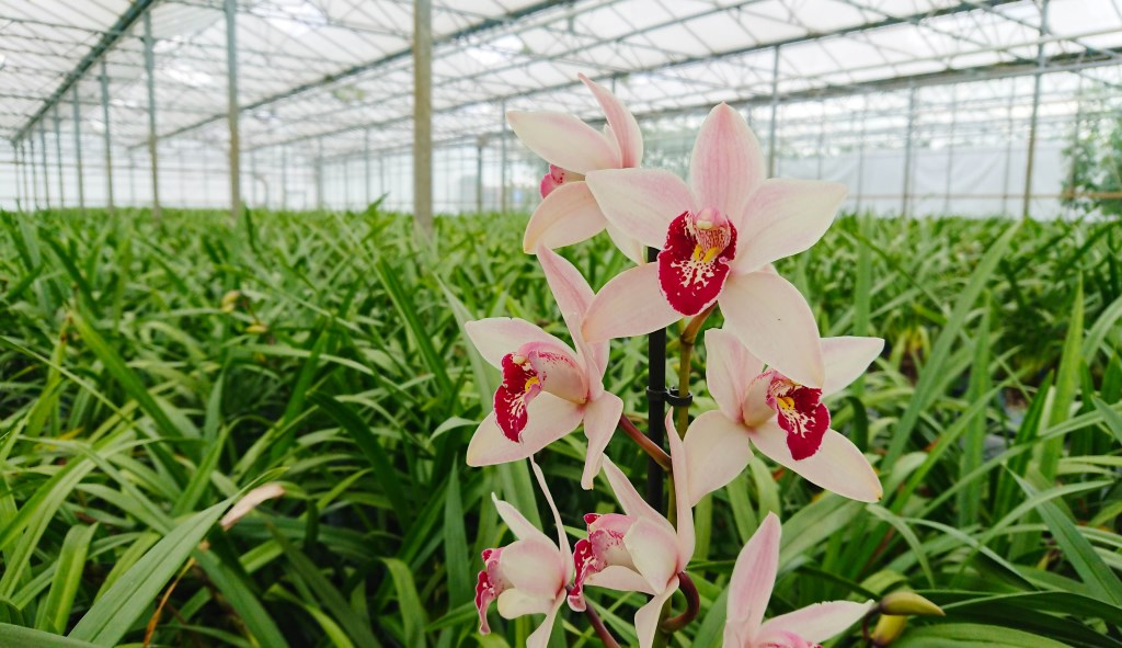 Foto: bos flowers & orchids © Verhagen