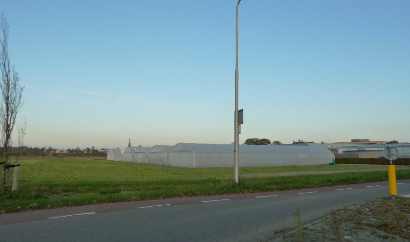 Het kassencomplex achter het pand van Hobaho aan de Prof. van Slogterenweg.