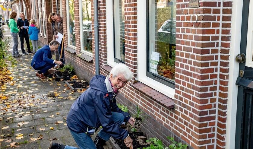 In de Hoofdstraat werd zaterdag hard gewerkt aan het beplanten van de geveltuintjes. Wethouder Joosten (op de achtergrond) hielp ook een handje mee.