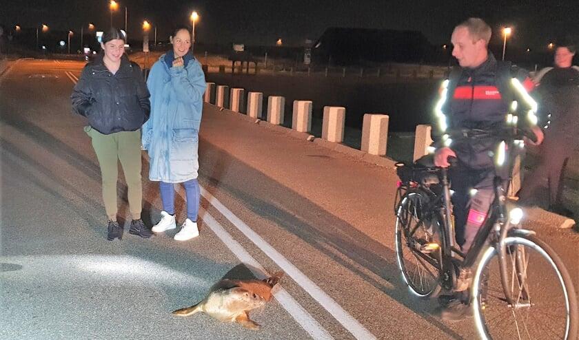 Je komt niet iedere dag een zeehond op de weg tegen. | Foto: EHBZ Katwijk aan Zee