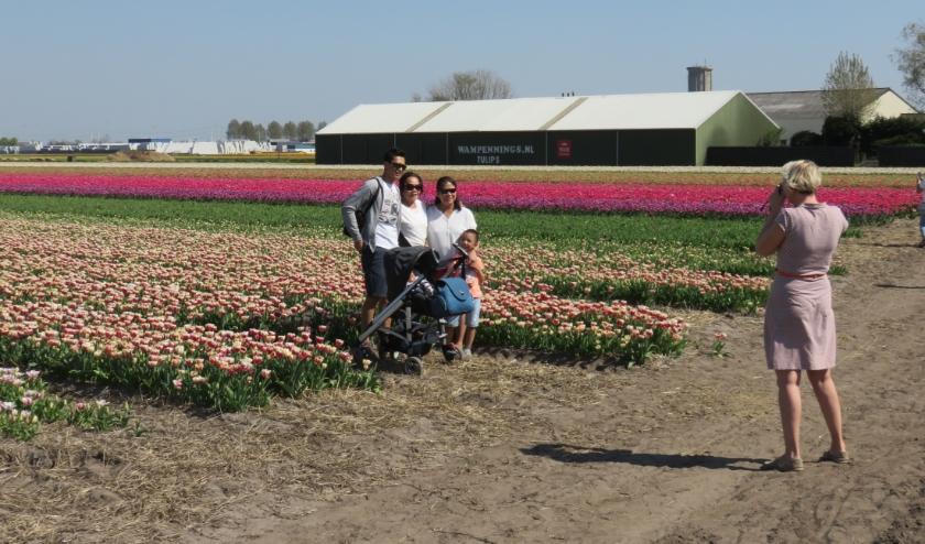 Om het maken van foto's op de bollenvelden goed te laten verlopen zijn vrijwilligers hard nodig.   Foto: PR
