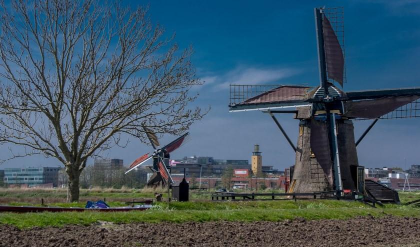 De molens in de Leiderdorpse Munnikkenpolder.