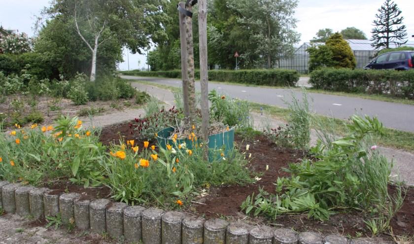 Moedertje Groen wil iedereen enthousiasmeren bloemen te zaaien voor insecten.   Foto: WS