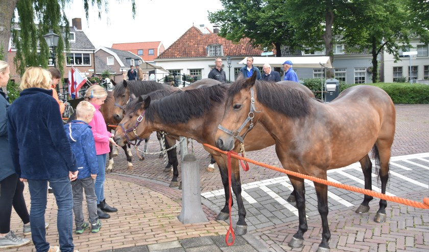 Vandaag staan de paarden centraal tijdens de Paardenmarkt. Maar er is meer te doen zoals de braderie, kermis en het ringsteken.