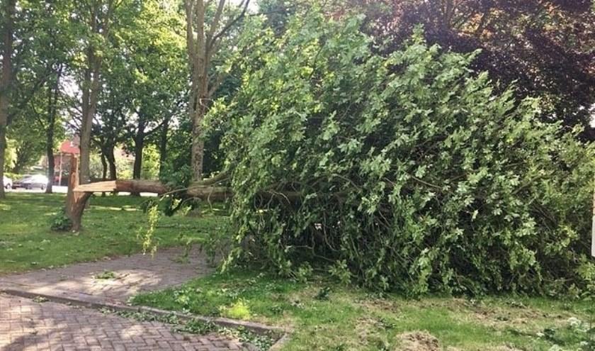 De boom achter het Shellstation was niet bestand tegen de harde wind.