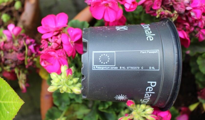 Voorbeeld plantenpaspoort.