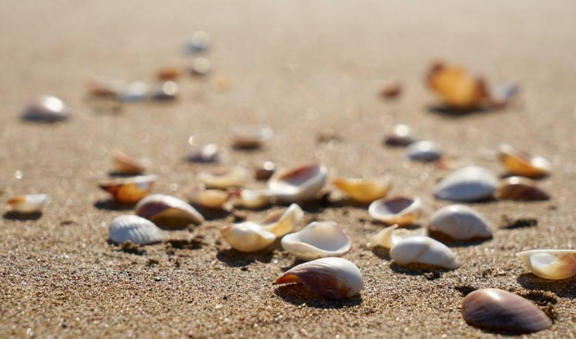 Natuurlijk zijn er schelpen te vinden op het strand, maar het zand herbergt nog veel meer.