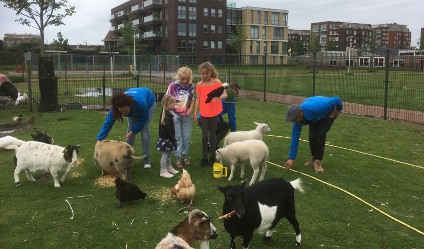 Vanmiddag is er een open middag op de dierenweide in Westerhaghe.