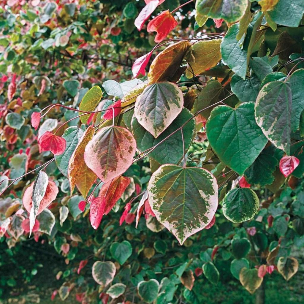 Foto: plantarium © Verhagen