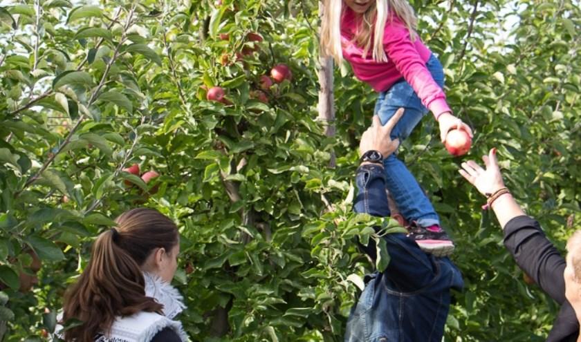 Je eigen fruit plukken. | Foto: PR