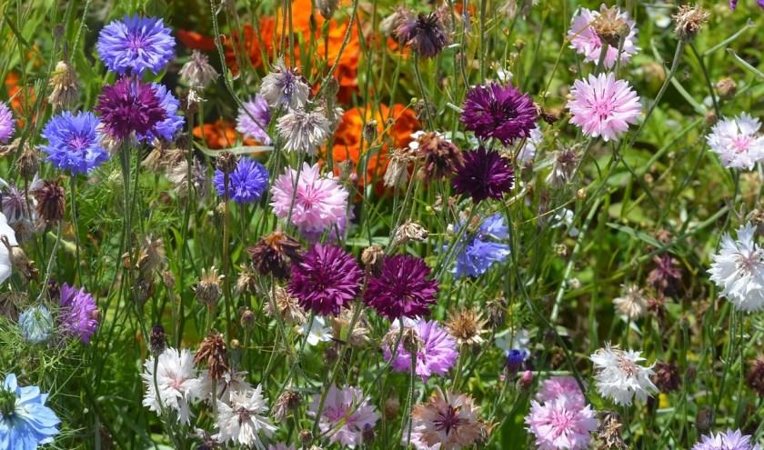 Met bloembommetjes zorg je voor een grote diversiteit aan kleurrijke bloemen. Dat doet vlinders en bijen plezier.