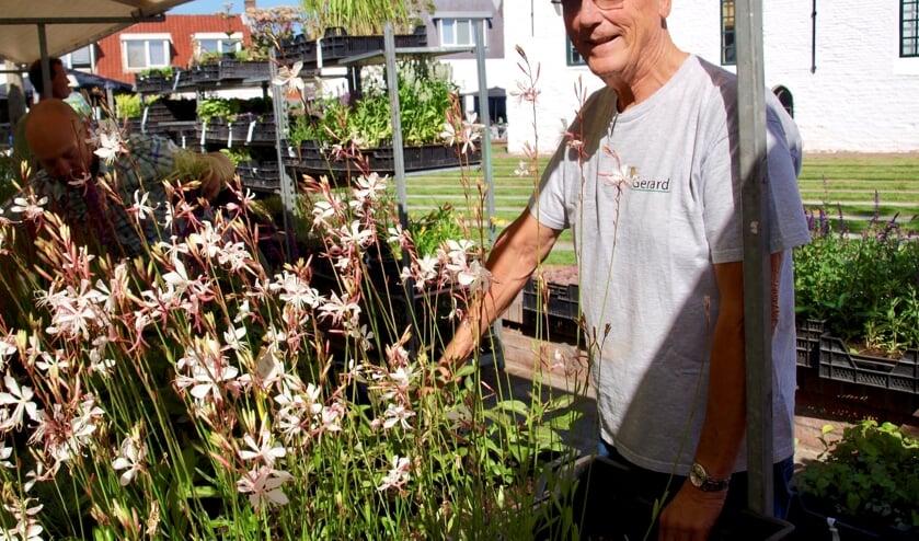 Gerard Rotteveel bij de populaire, bloeiende Gaura's (foto Piet de Boer)