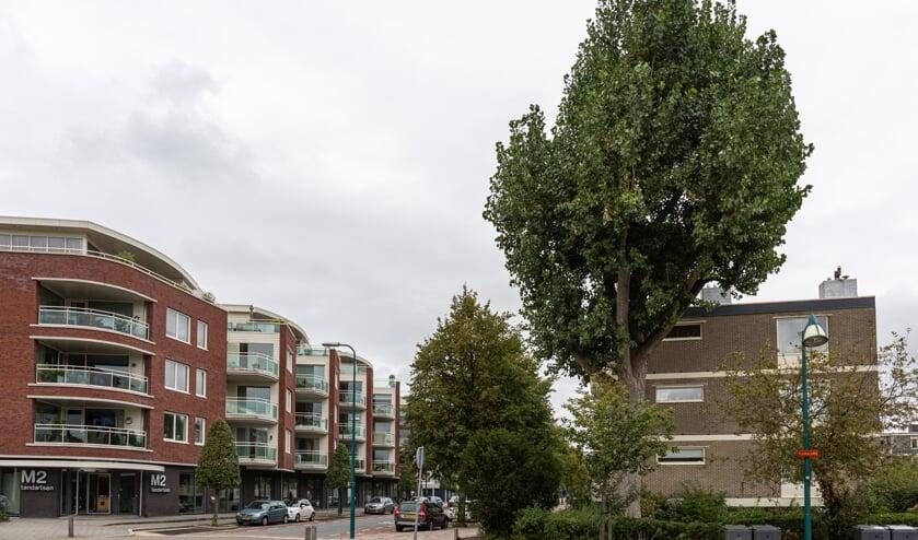 De boom die moet worden verwijderd.