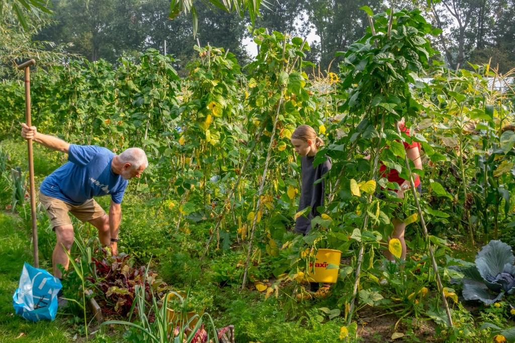 Een vrijwilliger helpt bij het oogsten. Foto: J.P.Kranenburg © uitgeverij Verhagen