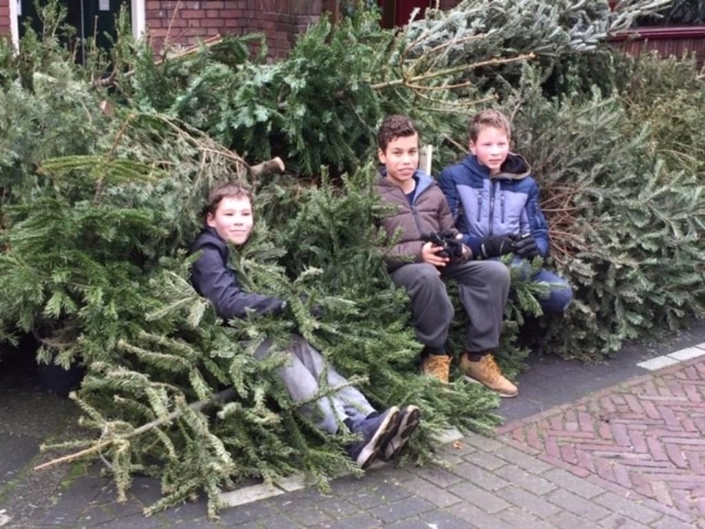 Lars, Guido, Mendel en Thomas (niet op de foto) uit de Koningstraat hebben dit jaar 123 kerstbomen ingezameld. Foto: PR © uitgeverij Verhagen