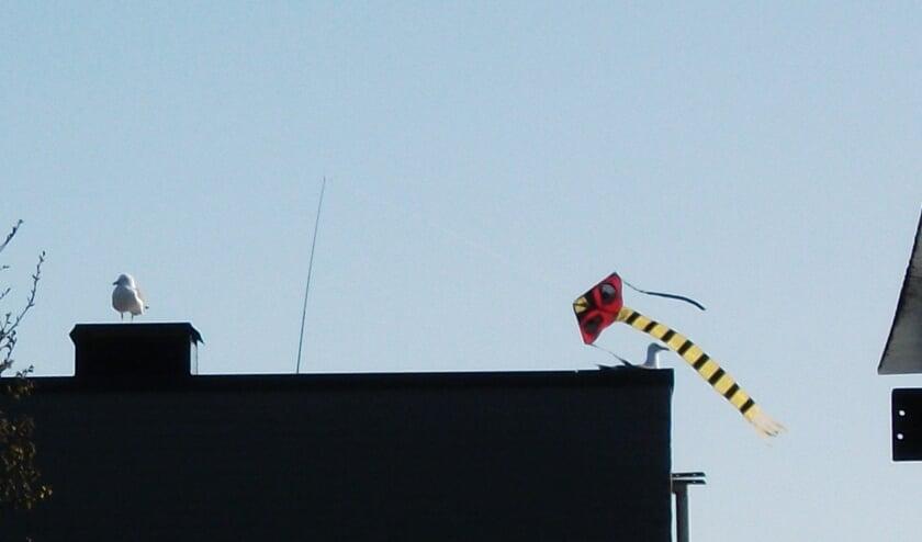Meeuwen trekken zich niets aan van de vliegers.   Foto Aad van der Leek