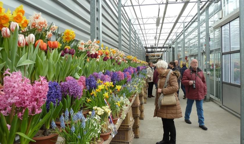 Vooral de hyacinten waren goed te ruiken op de Lenteflora.