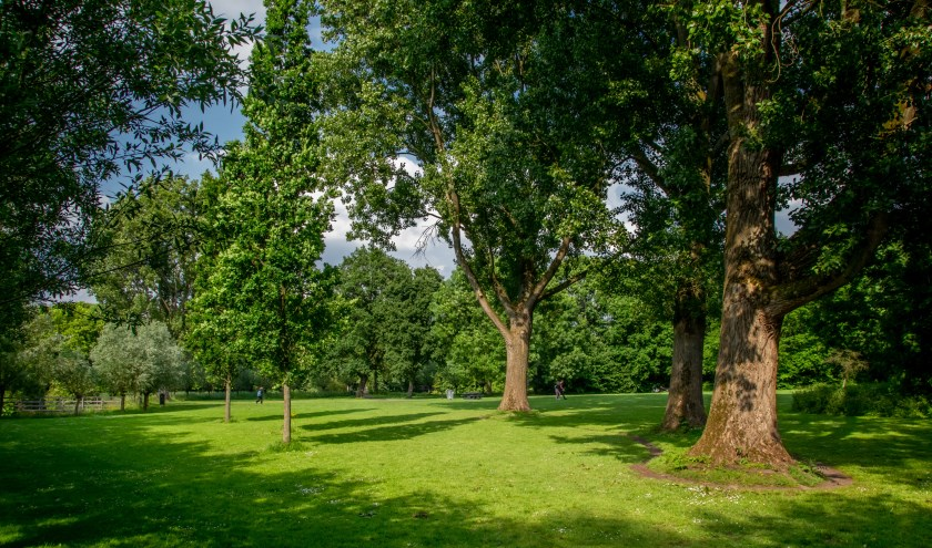 Leiderdorp heeft natuurlijk aardig wat bomen staan in parken De Houtkamp (foto) en De Bloemerd maar scoort wat aantallen bomen betreft toch matig. | Archieffoto: J.P. Kranenburg