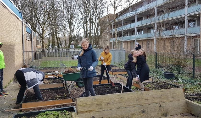 Leerlingen van Visser 't Hooft Lyceum hebben de moestuintjes weer gebruiksklaar gemaakt. | Foto: pr