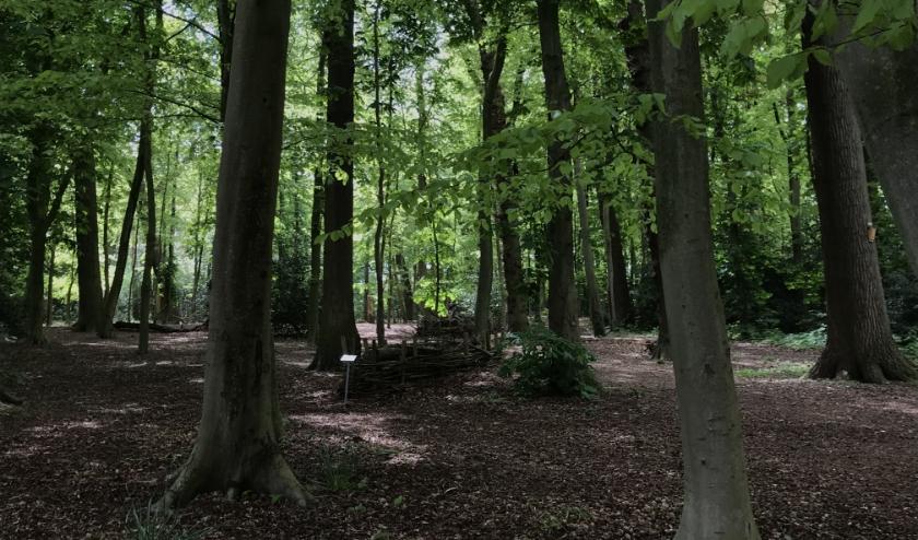 Het Overbosch ging van een moddergebied naar groene oase. | Foto: pr.