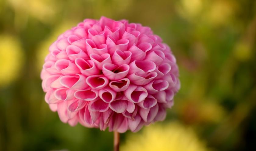 Anthos vertegenwoordigt wereldwijd de handel in bloembollen en boomkwekerijproducten.