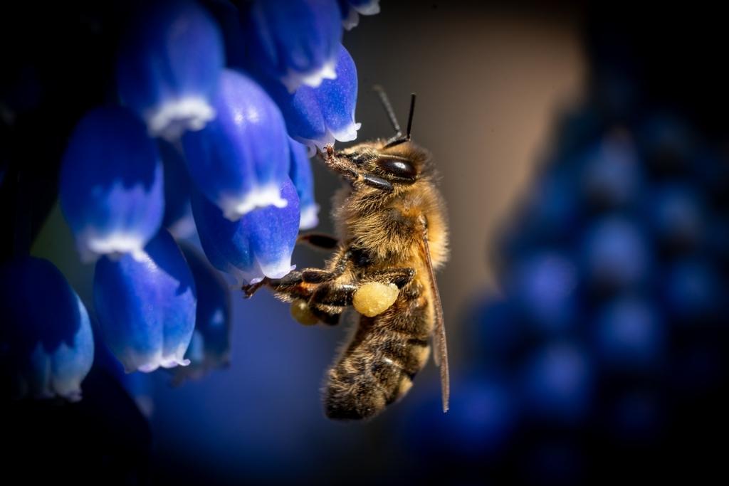 De foto van Robin Valk laat het harde werken, dag en nacht, van de bijen zien. Foto: Robin Valk © uitgeverij Verhagen