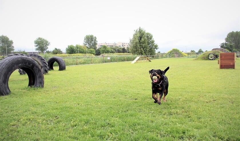 Honden kunnen lekker spelen en ontdekken in de speeltuin in de Duinvallei.   Foto: pr