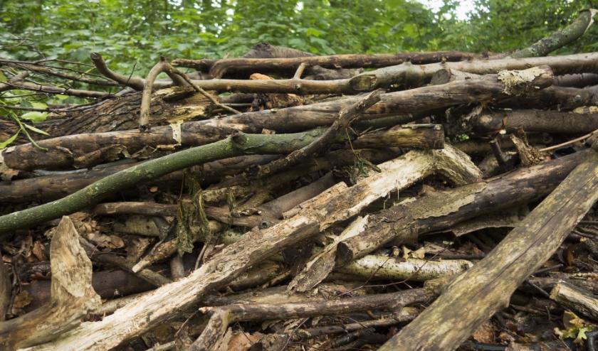 De houtwallen zijn schuilplaatsen voor de dieren. | Foto: pr./Kees Guldemond