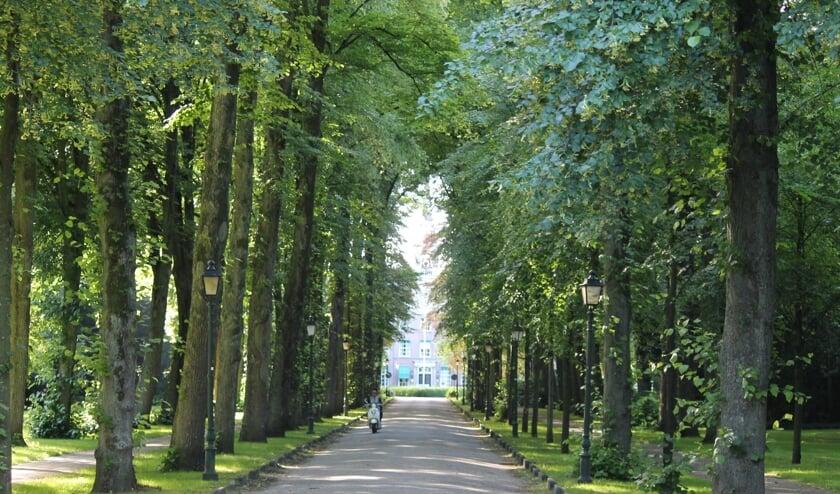 De Bisschopslaan met de hoge bomen aan weerszijde is een van bekendste straten in Warmond. | Foto: pr.