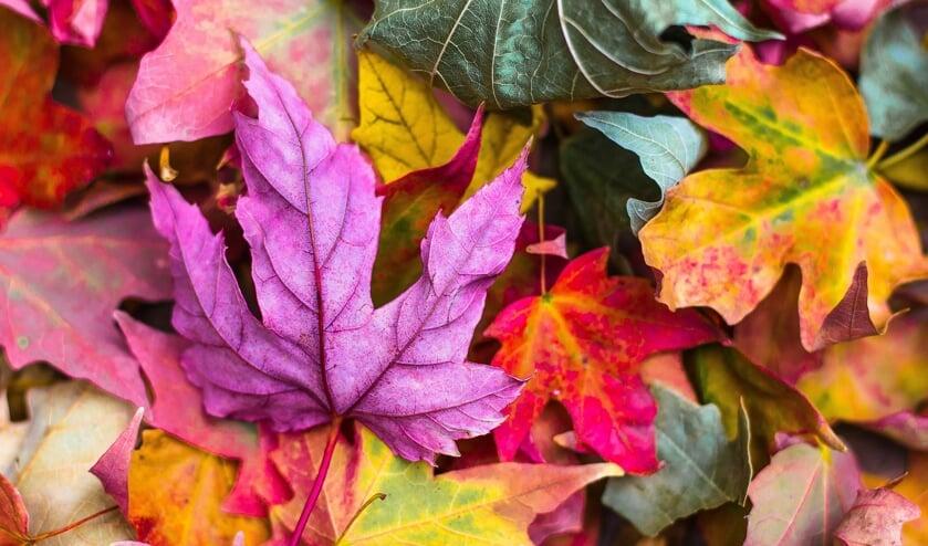 Als de bladeren beginnen te vallen, is het weer tijd voor bokbier.
