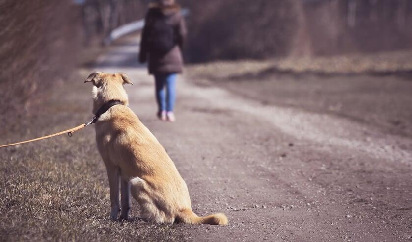 <p>Een schrikbeeld: een hond die gedumpt wordt.   Foto: Alexandra via Pixabay</p>