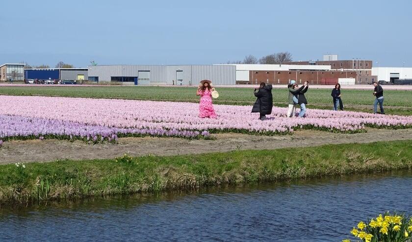 <p>Toeristen in de bloeiende velden aan de Prinsenweg in Voorhout. | Foto: pr./Gerard van Steijn</p>