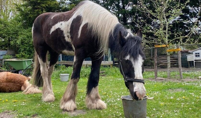 <p>Verrassende nuances kwam ter tafel toen de politiek de belanghebbenden van de paardenweitjes hoorde | Foto: BO</p>