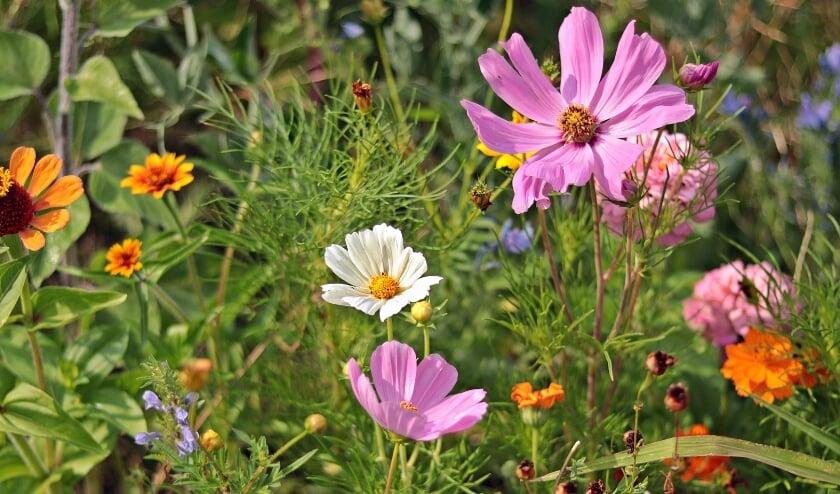 Het wordt kleurrijk in de tuin met de zaden.