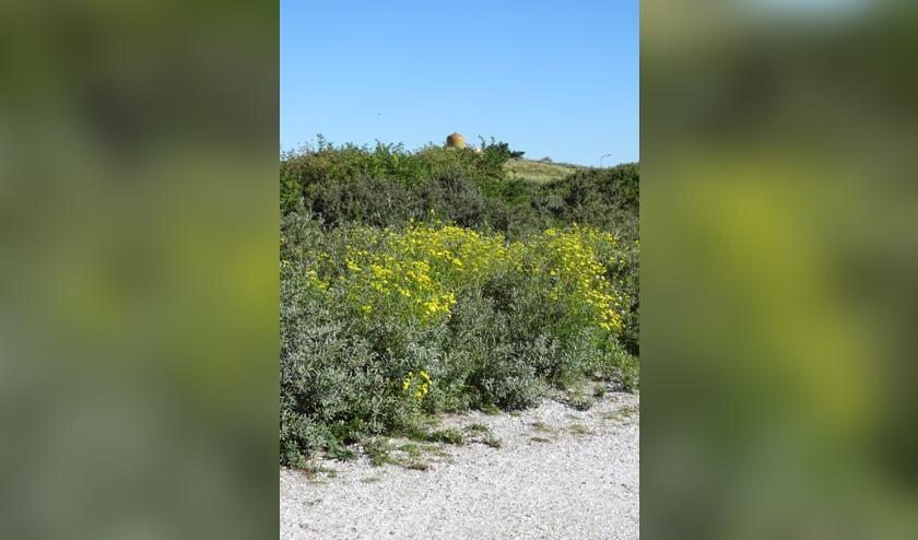 De wandelingen starten bij de Soefitempel in Katwijk, die gelegen is aan de rand van de duinen.