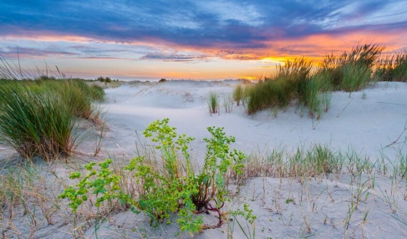 Zandduinen in de Kwade Hoek tijdens de zomer bij zonsondergang. | Foto: Nico van Kappel