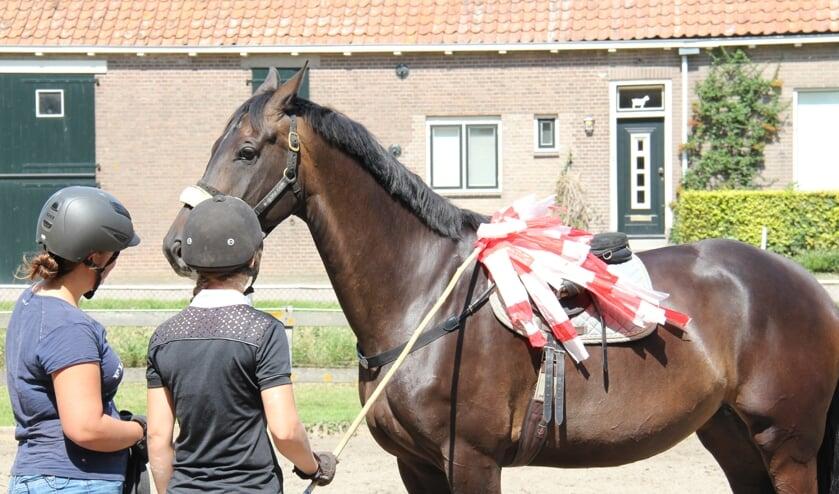 Hoe leren paarden?  De visie van Annemarie van der Toorn *E-learning-video*