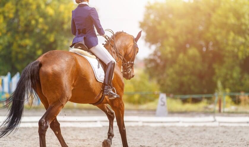 Juridisch bekeken: Paard in de staak ... wat nu?